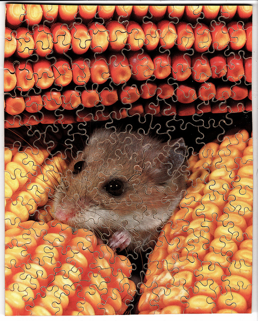 Mouse in the corn