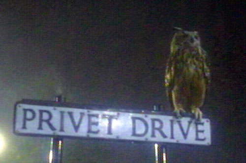 Eagle Owl on the Privet Dr. sign.
