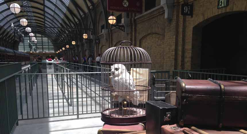 Hedwig in a cage