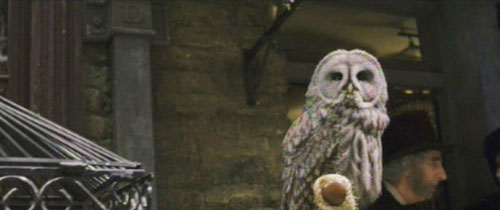 Great Gray Owl on Diagon Alley
