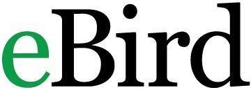 eBird logo