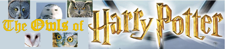 The Owls of Harry Potter BANNER