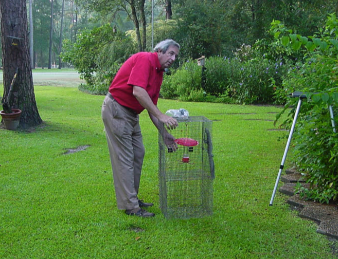 Cage trap for banding hummingbirds